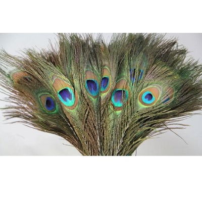 11-pack-of-30pc-natural-peacock-feathers